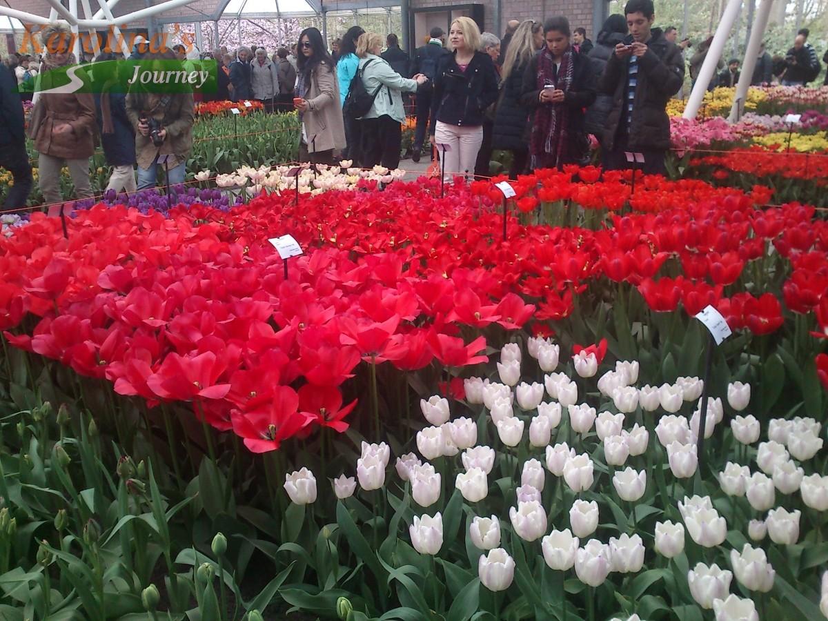 Keukenhof Celebrating Flowers In Holland Karolinas