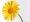 kvet-1219-1.jpg